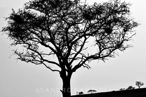 Wall Pictures - TREES B/W - DSC0736A