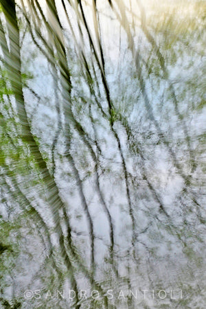 Wall Pictures - TREES between Impressionism and Abstraction- DSC6060