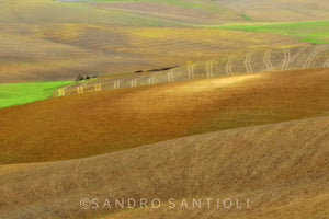 Wall Pictures - TUSCANY Landscapes - DSC9478
