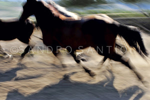 Wall Pictures -  HORSES Abstract - ISL0065