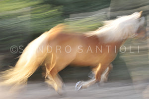 Wall Pictures - HORSES Abstract - ISL0229