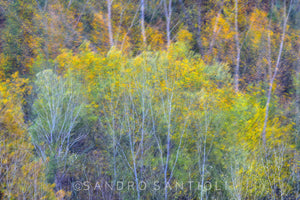 Wall Pictures - TREES between Impressionism and Abstraction- MIL4973