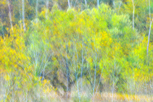 Wall Pictures - TREES between Impressionism and Abstraction- MIL4975