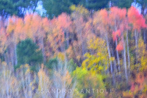 Wall Pictures - TREES between Impressionism and Abstraction- MIL4977