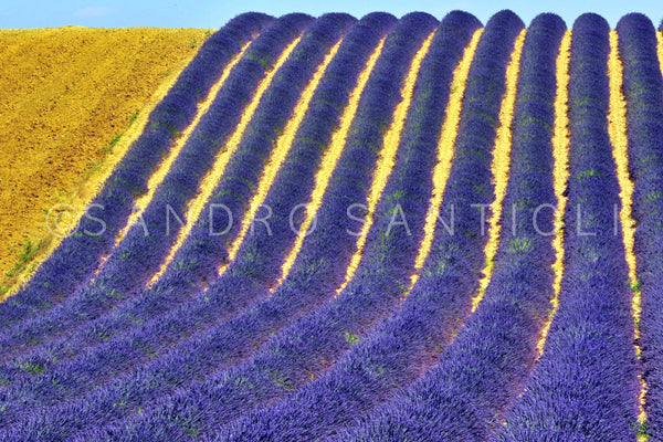 Wall Pictures - PROVENCE Lavender Fields - PRO3583