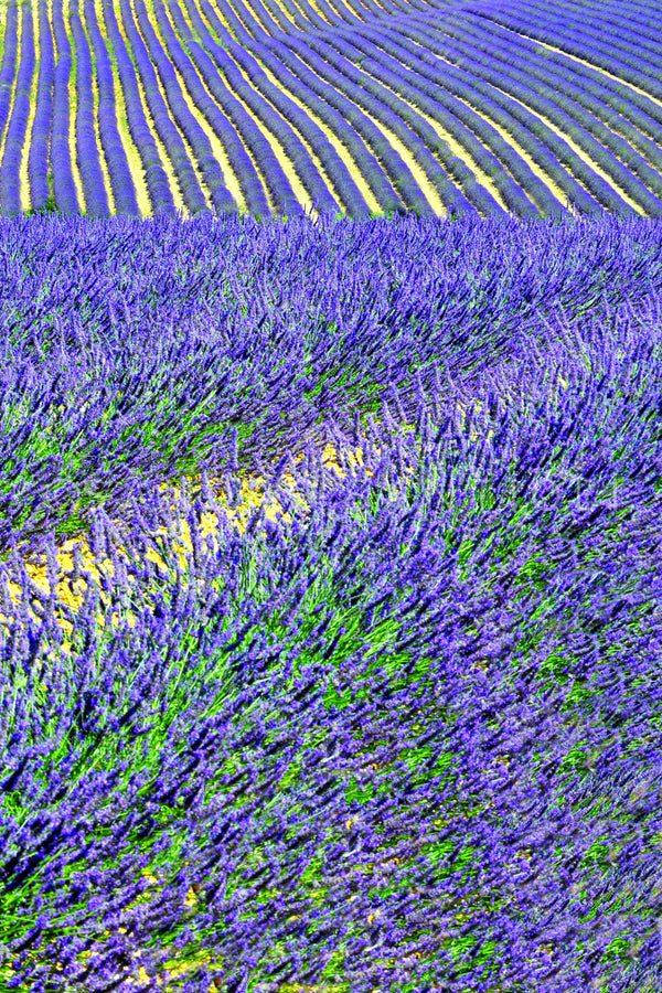 Wall Pictures - PROVENCE Lavender Fields - PRO3607