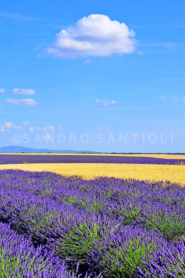 Wall Pictures - PROVENCE Lavender Fields - PRO8803