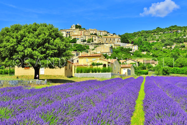 Wall Pictures - PROVENCE Lavender Fields - PRO9011