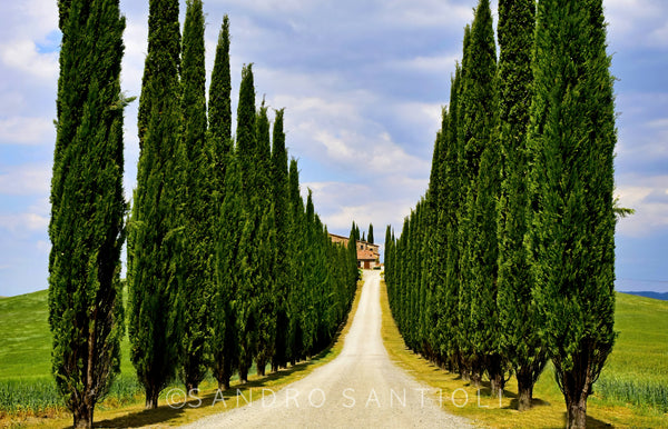 Wall Pictures - TUSCANY Landscapes - SCA9478