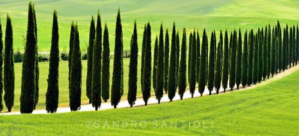 Wall Pictures - TUSCANY Landscapes - SCA9495