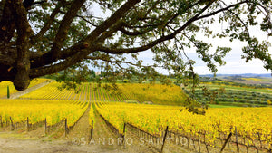 Wall Pictures - TUSCANY Landscapes - TOS0679