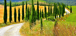 Wall Pictures - TUSCANY Landscapes - TOS0794