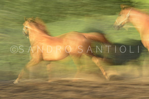 Wall Pictures - HORSES Abstract - TOS1495