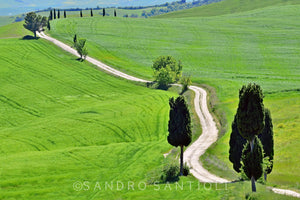 Wall Pictures - TUSCANY Landscapes - TOS1769