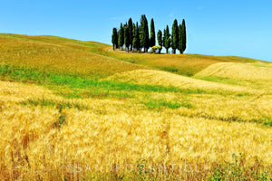 Wall Pictures - TUSCANY Landscapes - TOS8475