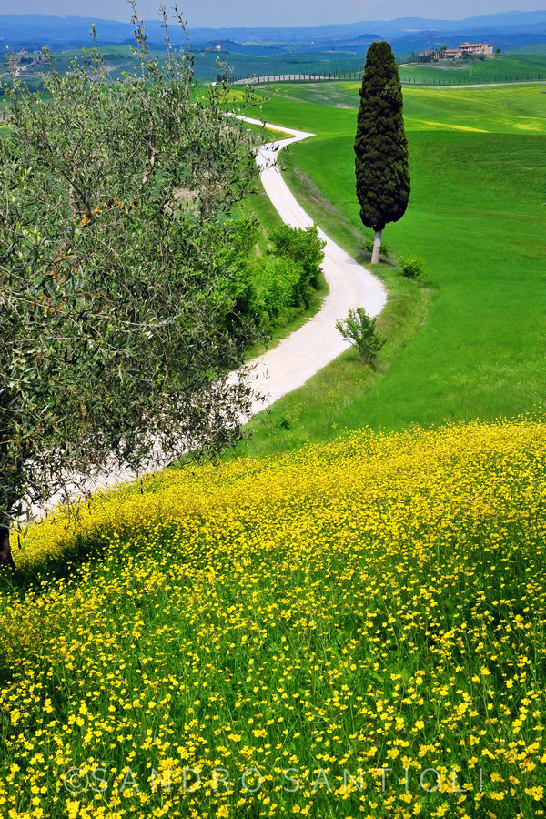 Wall Pictures - TUSCANY Landscapes - TOS0761