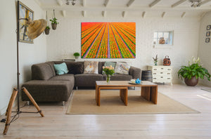 Wall Pictures - TULIPS & POPPIES - HOL3129