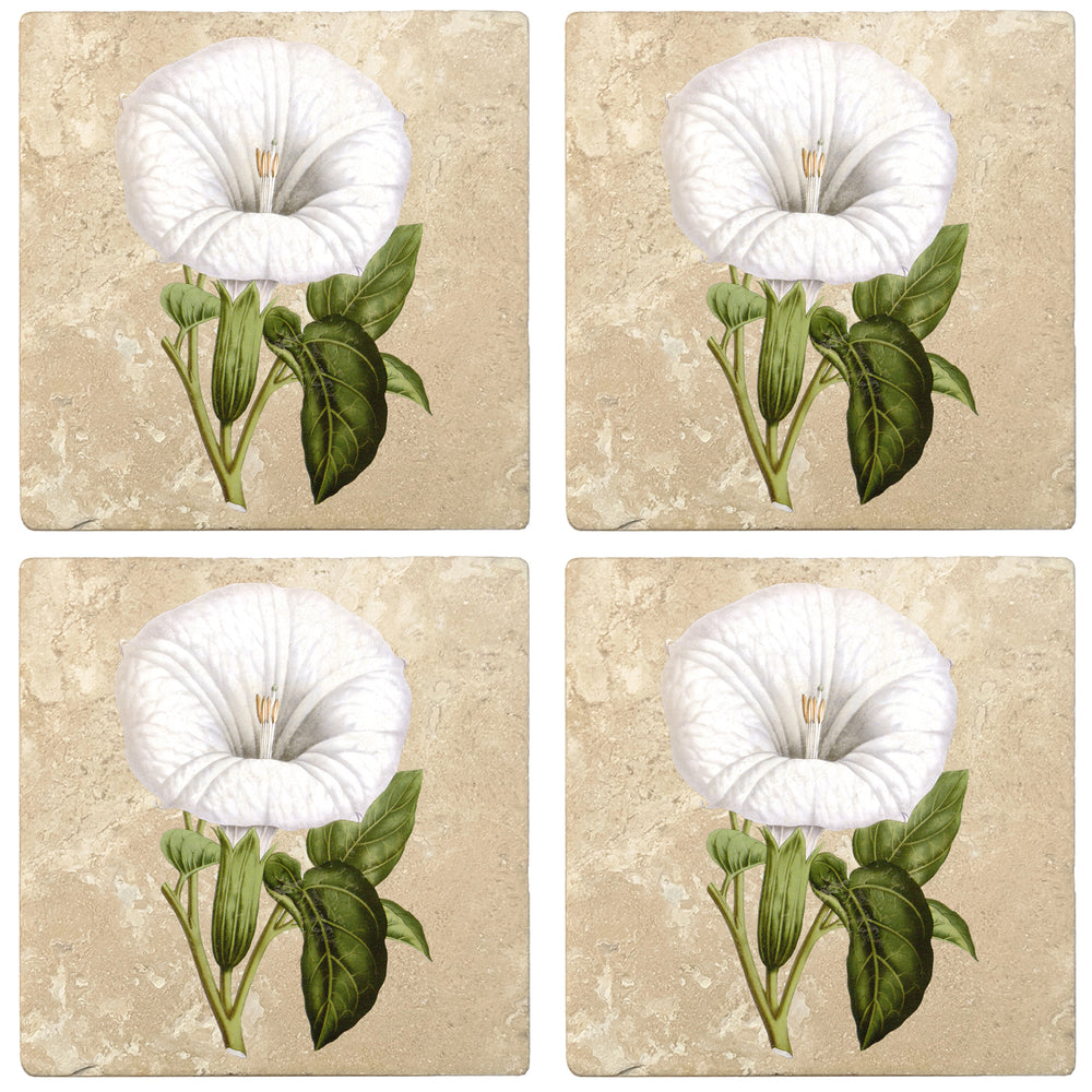 "Set of 4 Absorbent Stone 4"" Flower Designs Drink Coasters, Datura Metel"