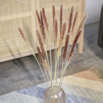 Pampas Grass Brown