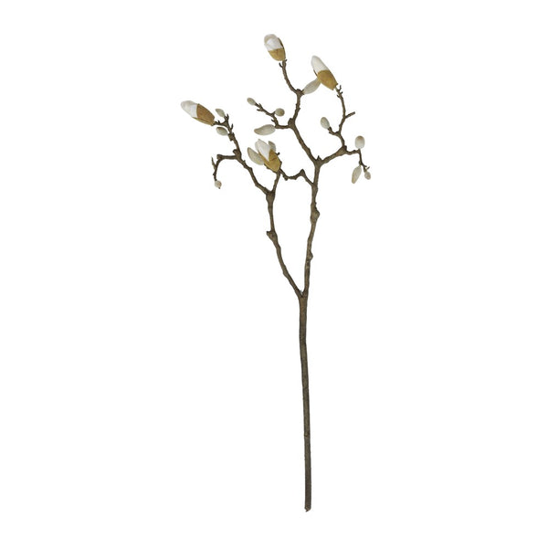 Magnolia Branch - Stem