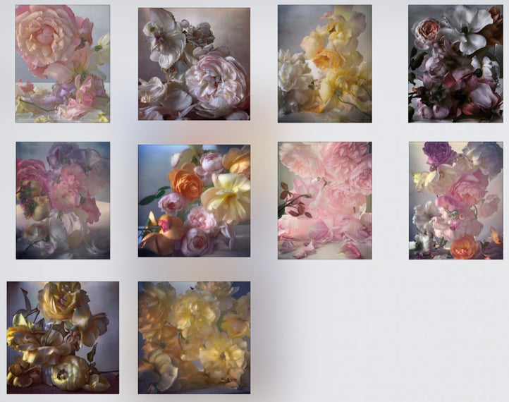 Nick Knight: Roses from my Garden Postcards