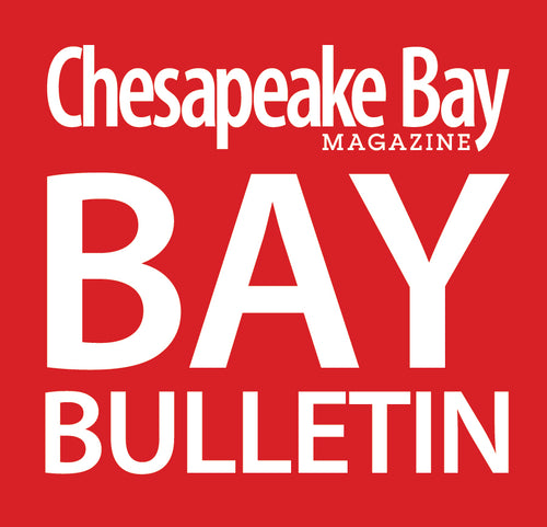 Bay Bulletin Email Banner Ad