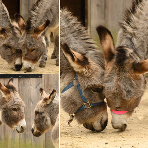 """Esther Loves Esau"" & ""Donkeys-for-Good"""