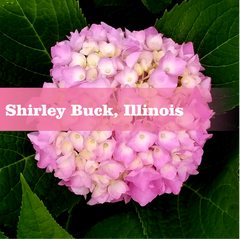 Shirley Buck, Illinois