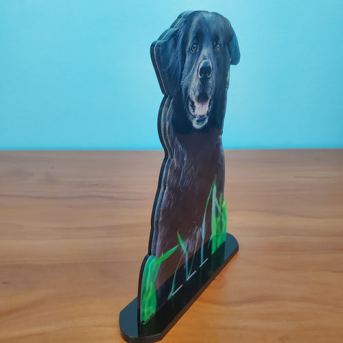 Photo Tiles, Acrylic Prints, Photo Wall Tiles, Wall Art, Wall Decor, Home Decor, Photo Prints, 5x7 AcryliCuts™ Therapy Dog Statuette - Oliver - PicFoams.com