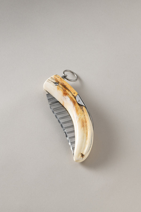 Tusk knife