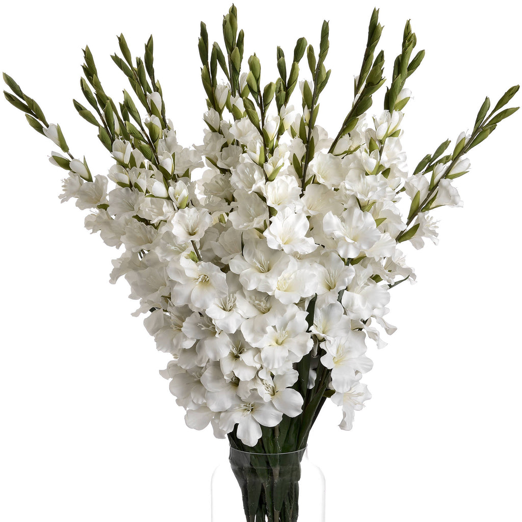 Winter White Gladioli