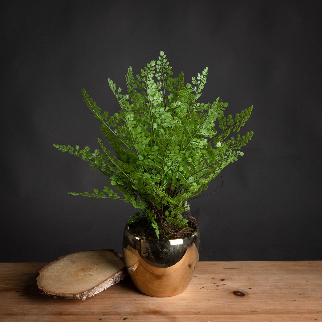 Artificial Sword Fern in Metallic Pot