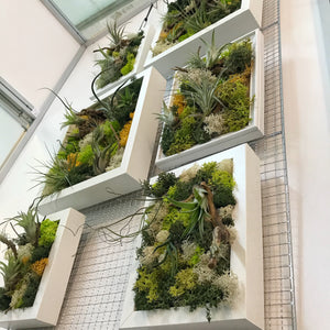 Six airplant greenwalls