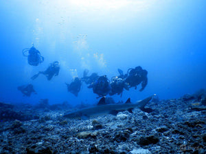 Eight scuba divers with a small shark in the foreground