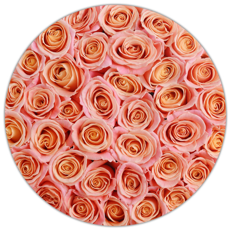 Medium - Peach Roses - Black Box - The Million Roses Slovakia