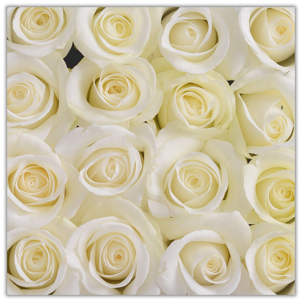 Cube - White Roses - White Box - The Million Roses Slovakia