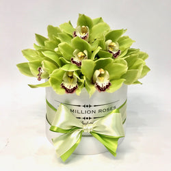 Small - Green Orchids - White Box - The Million Roses Slovakia