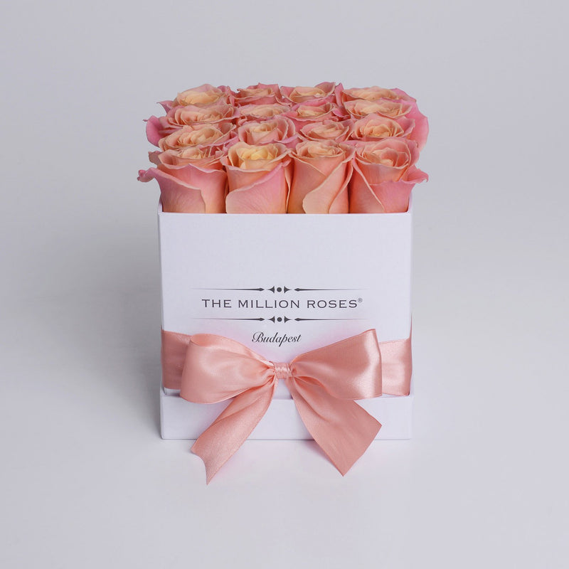 Cube - Peach Roses - White Box - The Million Roses Slovakia