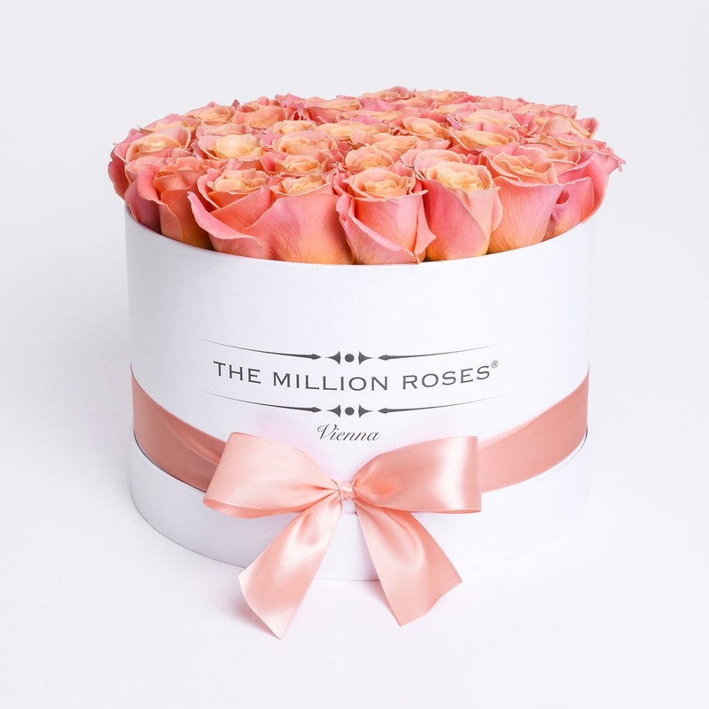 Medium - Peach Roses - White Box - The Million Roses Slovakia