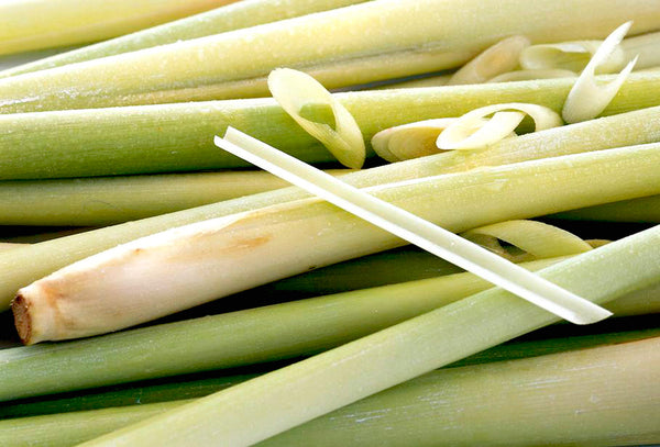 Lemongrass – Benefits And Uses - HYSSES