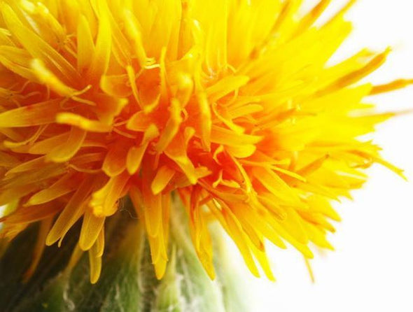 Safflower-oil_RLI5V8JW9UM4.jpg