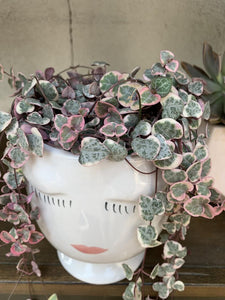 Variegated String Of Hearts from Natures Planters by Tory Rand
