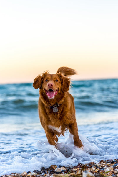 5 Easy Ways To Improve Your Pet's Wellness