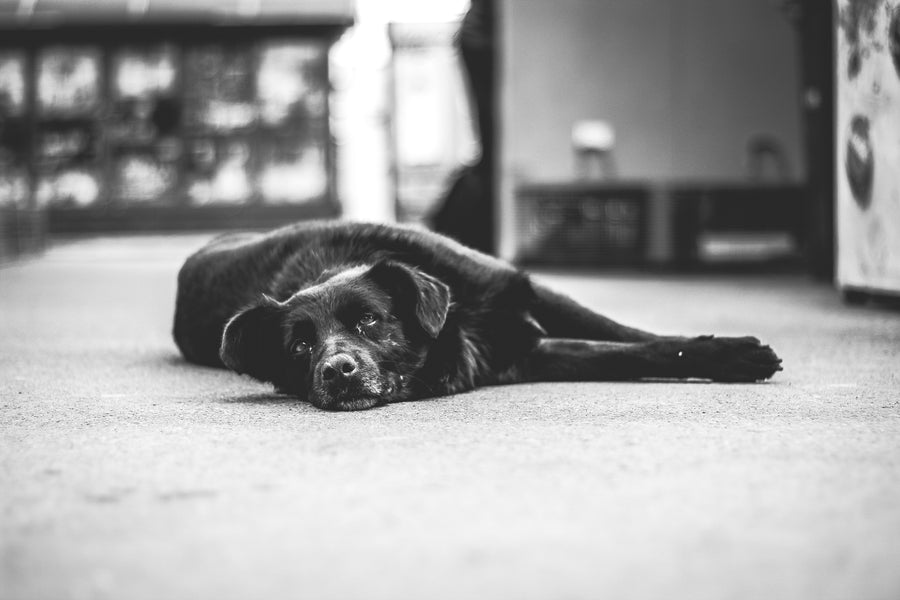 10 Things to Consider When Adopting a Senior Dog