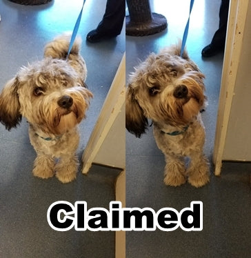 LOST DOG - CLAIMED!