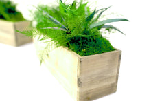 Set of 2 Wooden Planter Boxes With Preserved Moss and Ferns - No Watering