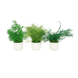 Set of 3 Preserved Fern Variety Potted Plants - No Watering