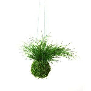 Grassy Fern Kokedama - Sitting or Hanging - Preserved Moss and Fern Plant