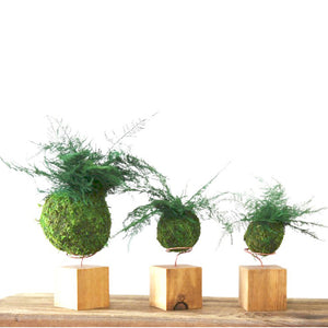 Set of 3 Fern & Moss Natural Wooden Desk Cubes
