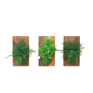 Set of 3 Fern & Moss Reclaimed Wood Flats